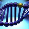 Геном человека: новые открытия