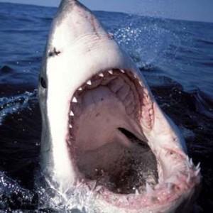 Между акулами и серийными убийцами есть сходство